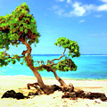 Shoreline At Makalawena by Dominic Piperata