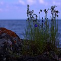 Shoreline Beauties by The Stone Age
