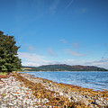 Shoreline On The Kyles Of Bute by David Head