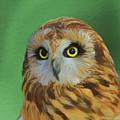 Short Eared Owl On Green by Dan Sproul
