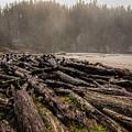 Short Sands Log Slash by Diana Powell