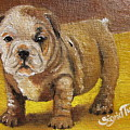 Chloe The   Flying Lamb Productions      Shortstop The English Bulldog Pup by Sigrid Tune