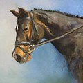 Showhorse by Debbie Anderson