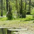 Shreks Swamp by Kandi Neussendorfer