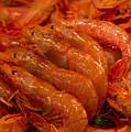 Shrimps by Svetlana Sewell