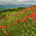 Shrine Pass Wildflowers by Jim Bennett