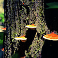 Shroomtree by Christina Zizzo