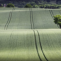Shropshire Hills by Maria Boncheva