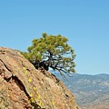 Shrub And Rock At Canon City by Robert Meyers-Lussier