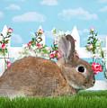 Shy Brown Dwarf Bunny Portrait by Sheila Fitzgerald