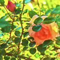 Sketchy Rose by Kay Brewer