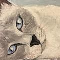 Siamese Cat by Boni Arendt