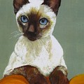 Siamese Cat by Morgan Fitzsimons