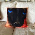 Siamese Pillow by Karen Zuk Rosenblatt