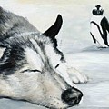 Siberian Huskey by Charlotte Yealey