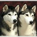 Siberian Huskies Related by Maxine Bochnia