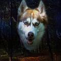 Siberian Husky by Brian Roscorla