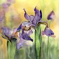 Siberian Iris by Kathy Harker-Fiander