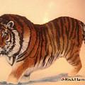 Siberian Snow Tiger by Rick Elam