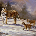 Siberian Tiger Family by Silvia  Duran