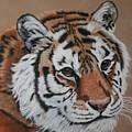 Siberian Tiger by Lori DeBruijn