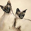 Sibling Love by Cori Solomon