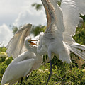 Sibling Squabble by Christopher Holmes