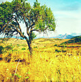 Sicilian Landscape With Tree by Silvia Ganora