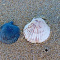 Side By Side Shells by Brian Eberly