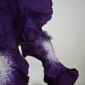 Side View Purple And White Iris by Teresa Mucha