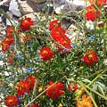 Sidewalk Flowers by Jessie Henry