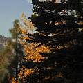 Sierra Autumn Moonset by Diane Zucker