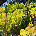 Sierra Fall Forest by Norman Andrus