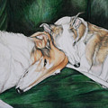 Sighthound Comfort by Charlotte Yealey