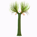 Sigillaria Tree by Corey Ford