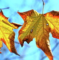 Signs Of Fall by Lori Leigh