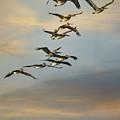 Silent Flock by Jai Johnson