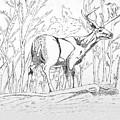 Silent Forrest by Daniel Shuford