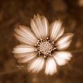 Silent Petals by Trish Tritz