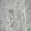 Silent Snowfall Portrait II by Everet Regal