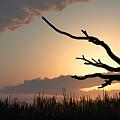 Silhouette by Bob Orsillo