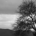 Silhouette by Lauri Novak