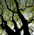 Silhouette Of A Tree Trunk With New Growth In Springtime by Sami Sarkis