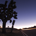 Silhouette Of Joshua Trees Yucca by Rich Reid
