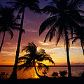 Silhouette Of Palm Tree On The Coast by Panoramic Images