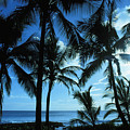 Silhouette Of Palms by Dana Edmunds - Printscapes