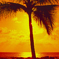Silhouetted Palm by Ron Dahlquist - Printscapes
