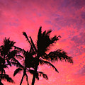 Silhouetted Palms by Ray Mains - Printscapes