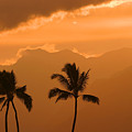 Silhouetted Palms by Ron Dahlquist - Printscapes