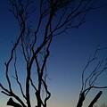 Silhouetted Twilight by Liza Eckardt